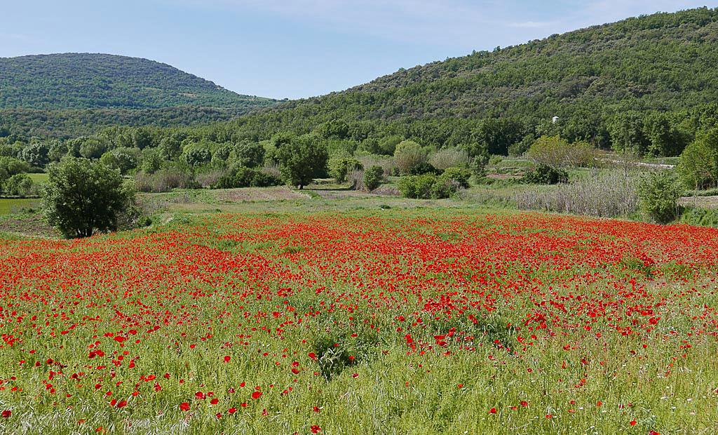 Lleida-5