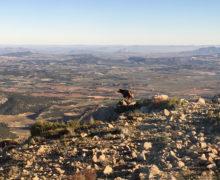 Winter in Spanje: naar de bergen en olijfboomgaarden
